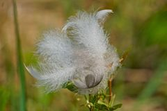 Windblown Federn Lizenzfreies Stockfoto