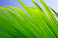 Windblown leaves stock images