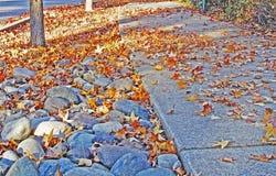 Windblown leaves Stock Image