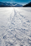 Windblown snowmobile tracks Stock Photos