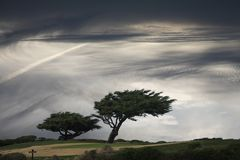 Windblown tree Stock Images