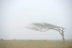 Windblown Tree arkivbilder