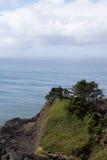 Windblown trees on sandy hillside Stock Photos