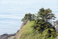 Windblown trees on sandy hillside Royalty Free Stock Photography