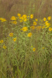 Windblown Yellow Wildflowers Stock Photography