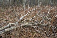 Windbreak forest area stock photos