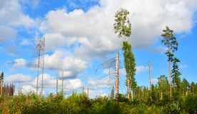 Windbreak 7. Before the hurricane there was a forest. Stock Photos