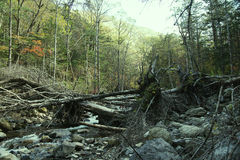 Windbreak. Photo of the mountain small river, the wood and the tumbled-down trees Royalty Free Stock Image