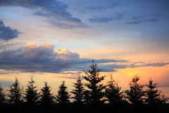 Windbreak Sunset Stock Photography