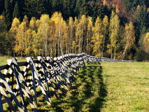 Windbreakers. In czech autumn landscape Stock Photography
