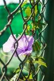 Winde auf einem Zaun Stockfotos