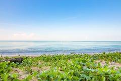 Winde auf Strand lizenzfreie stockfotografie