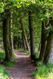Winde einer Schmutzbahn durch belaubte grüne Bäume und unter Br lizenzfreies stockbild