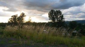 Winded fält Fotografering för Bildbyråer