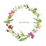 Winden Sie Grenzrahmen mit wilden Kräutern, Wiesenblumen, Schmetterlinge watercolour Lizenzfreie Stockfotografie
