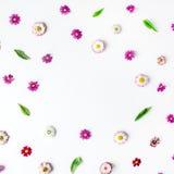 Winden Sie Rahmenherz mit Rosen, Kamillenknospen Lizenzfreies Stockbild
