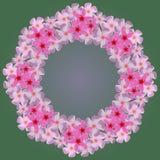 Winden Sie vom weißen Plumeria auf einem grünen Hintergrund Lizenzfreie Stockfotos