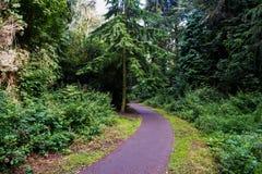 Windend Forest Path Stock Fotografie