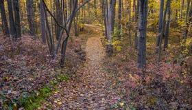 Windend Forest Path royalty-vrije stock afbeeldingen