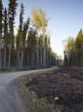 Windende bosweg Royalty-vrije Stock Foto