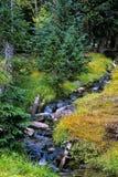 Windende Kreek in Groot Bassin Nationaal Park, Nevada Stock Foto's
