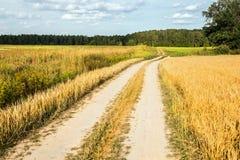 Windende landweg door gebieden van tarwe en klaver Royalty-vrije Stock Foto