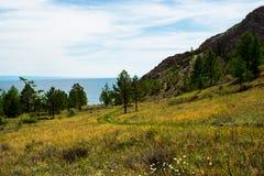Windende landweg door groene gebieden met pijnboombomen en bergen royalty-vrije stock afbeelding