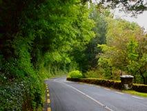 Windende landweg met groen Royalty-vrije Stock Foto's