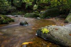 Windende rivier in het bos stock fotografie