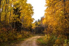 Windende sleep door de herfstbos Stock Afbeeldingen