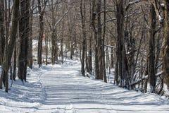 Windende sneeuw behandelde landweg Stock Foto