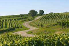 Windende weg in de wijngaarden van de Elzas royalty-vrije stock fotografie