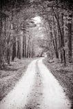 Windende weg door het bos Stock Fotografie