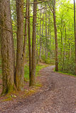 Windende Weg in het Bos royalty-vrije stock foto's