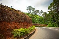 Windende weg langs de theeaanplantingen Stock Afbeelding