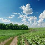 Windende weg op groen gebied Royalty-vrije Stock Afbeelding
