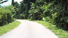 Windende wildernisweg bij dicht bos met groene bomen stock video