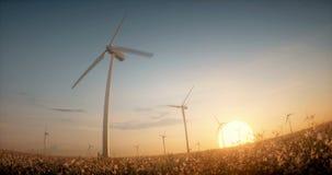 Windenergieturbinen unter Blumen im Sonnenuntergang beleuchten stock video footage