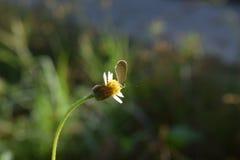 Winderige bloem Stock Foto