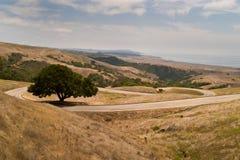 Winderige weg met bomen. Stock Foto