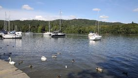 Windermere Lake District from Bowness with boats and ducks in summertime stock video