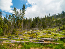 Windfall in forest after storm Royalty Free Stock Photo
