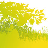 Windfall in the indian summer. Green windfall in the indian summer Stock Image