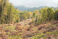 Windfallen trees. Caucasus. Felled and piled in a heap the trees on the slope of mountain Royalty Free Stock Photos