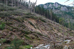 Windfalls after passing hurricane in Tatra Stock Images