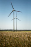 Windfarm in green fields. Wind turbines in fields of rye Stock Image