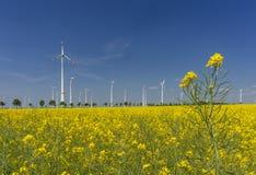 Windfarm met de groene energie van het canolagebied royalty-vrije stock foto's