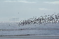 Windfarm och fåglar Royaltyfri Fotografi