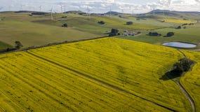 Windfarm op canolagebied 02 stock foto