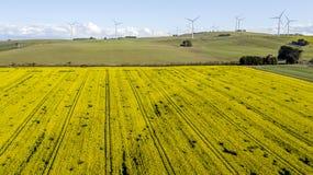 Windfarm op canolagebied 04 stock foto
